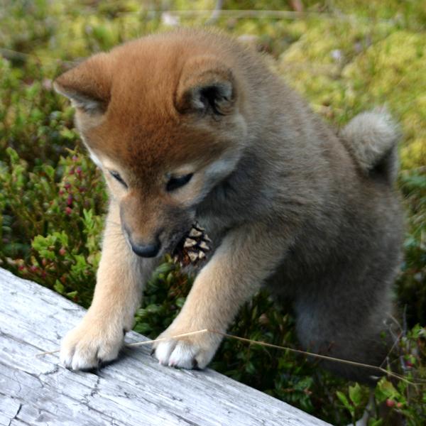 http://ylis.se/img/photo/pets/puppy36.jpg