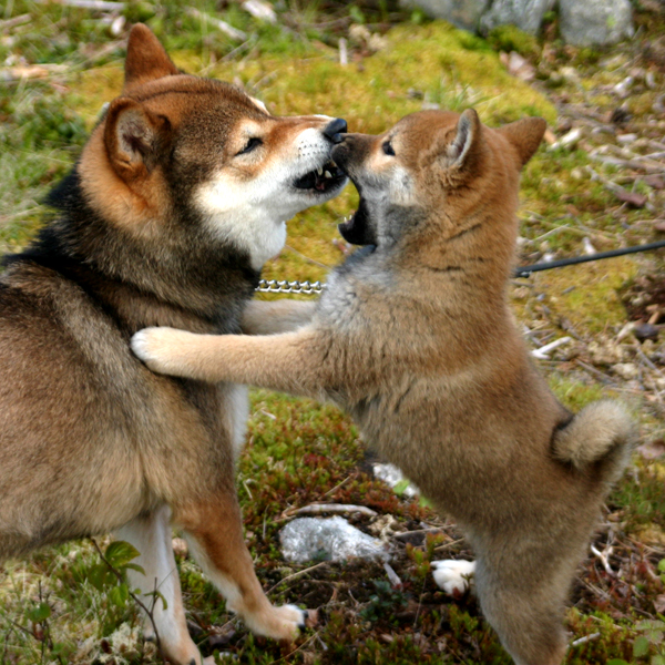 http://ylis.se/img/photo/pets/puppy37.jpg