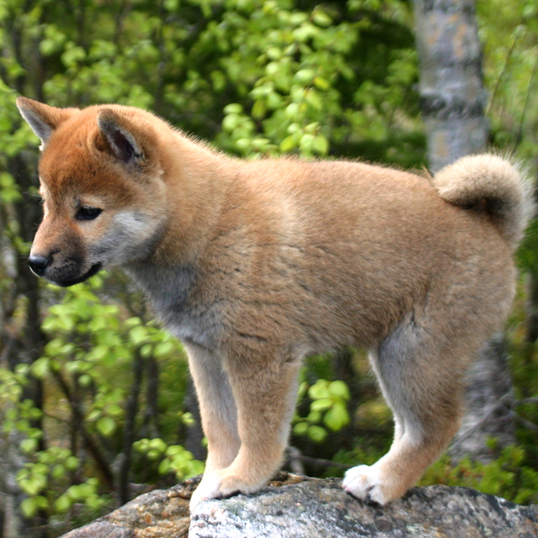 http://ylis.se/img/photo/pets/puppy38.jpg
