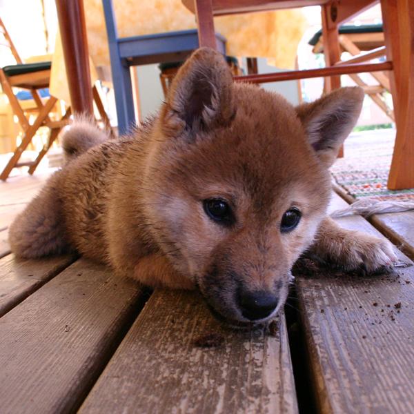 http://ylis.se/img/photo/pets/puppy40.jpg