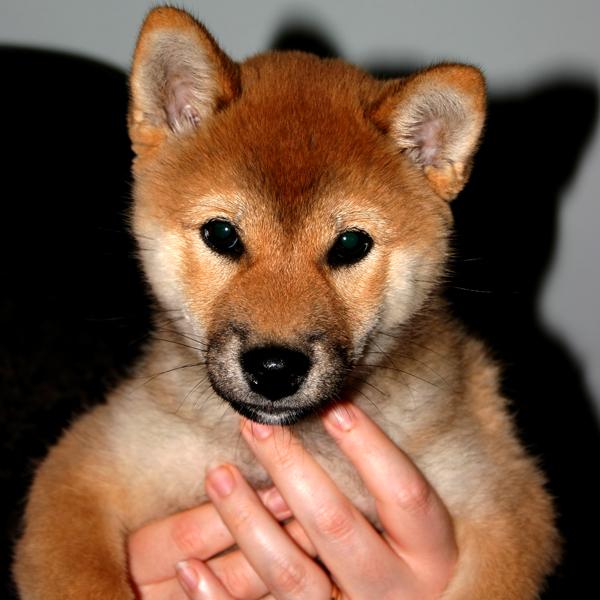 http://ylis.se/img/photo/pets/puppy42.jpg